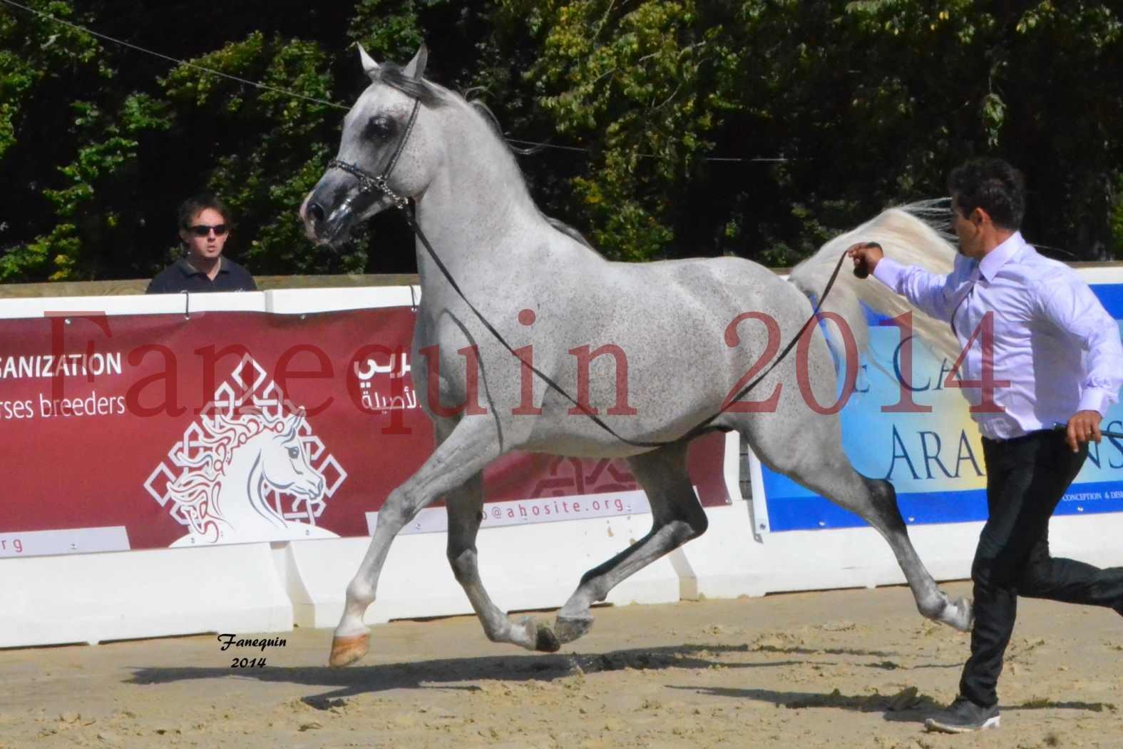 CHAMPIONNAT DE FRANCE  2014 A POMPADOUR - Notre Sélection - SHEYK DE GARGASSAN - 01