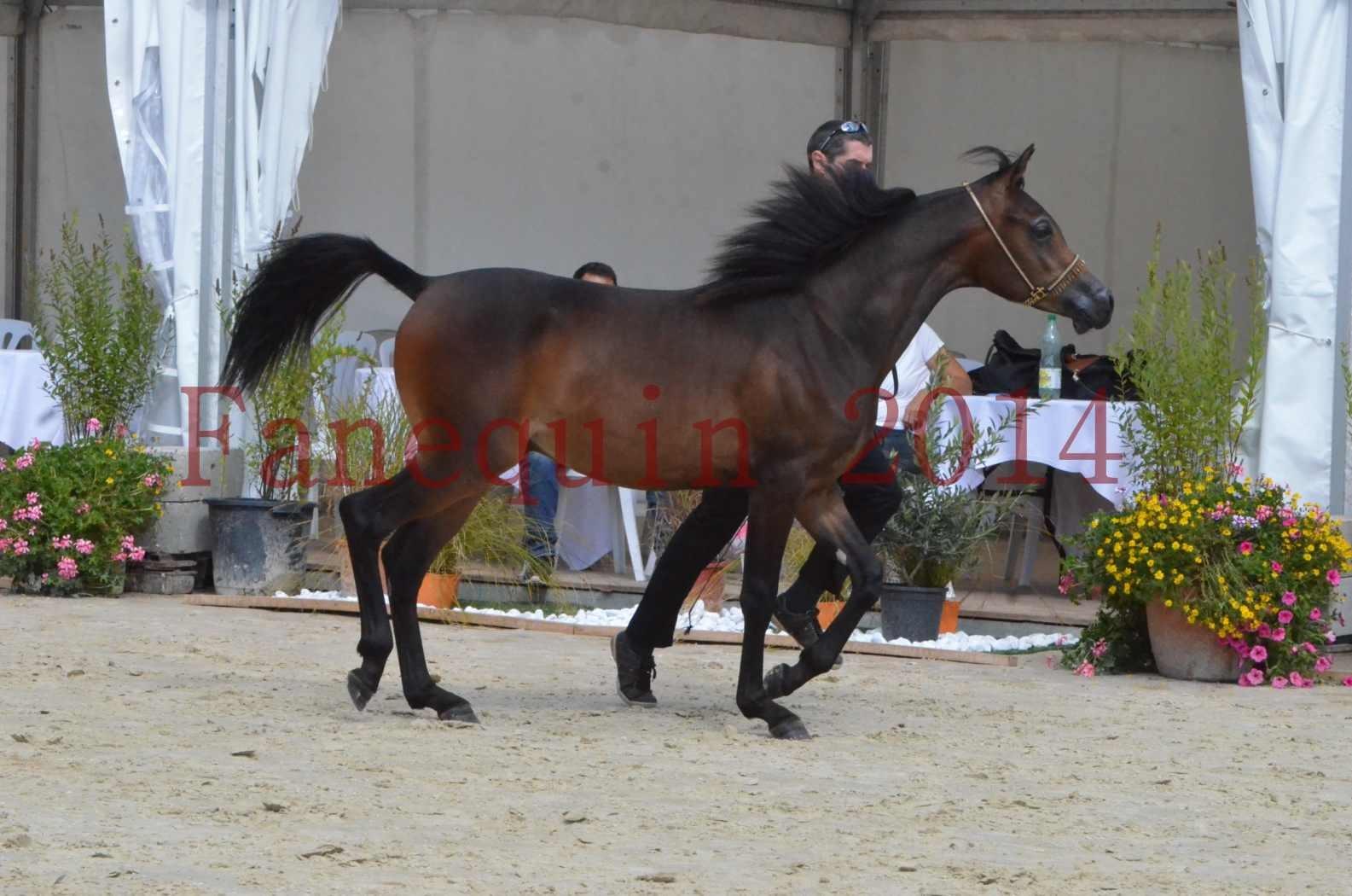 Championnat de FRANCE 2014 - Amateurs - SH FARAJAA - 25