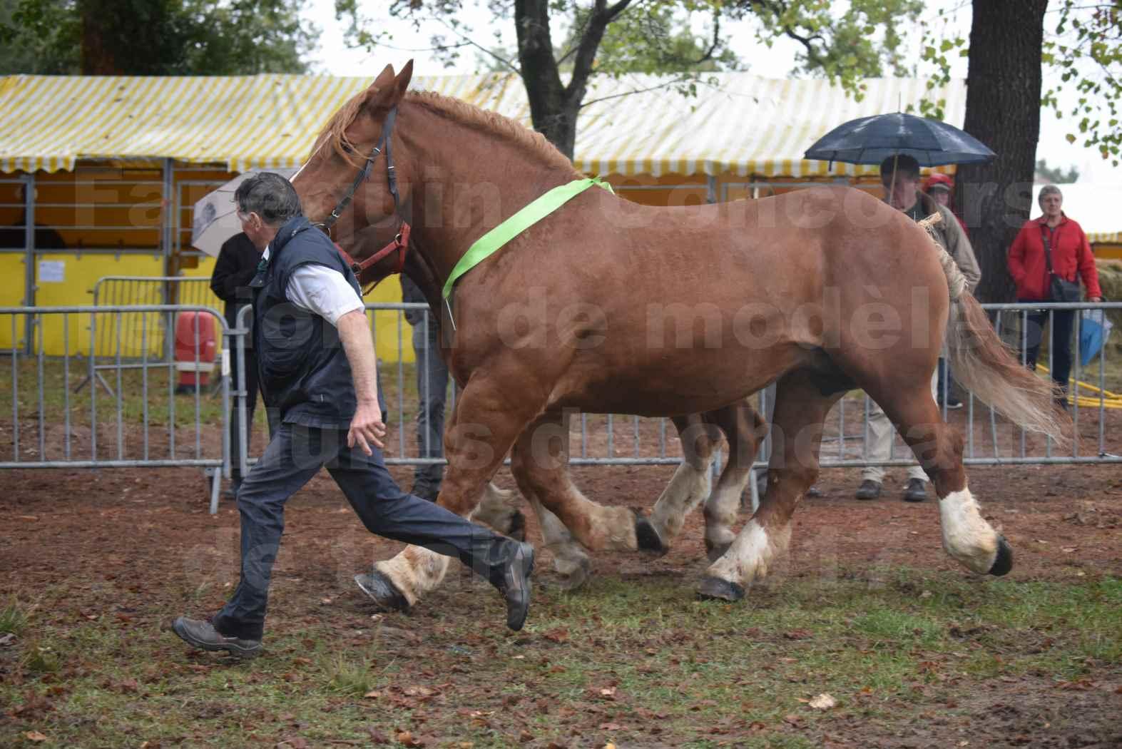 Concours Régional de chevaux de traits en 2017 - Trait BRETON - Jument suitée - ROYALE DE MARS - 10