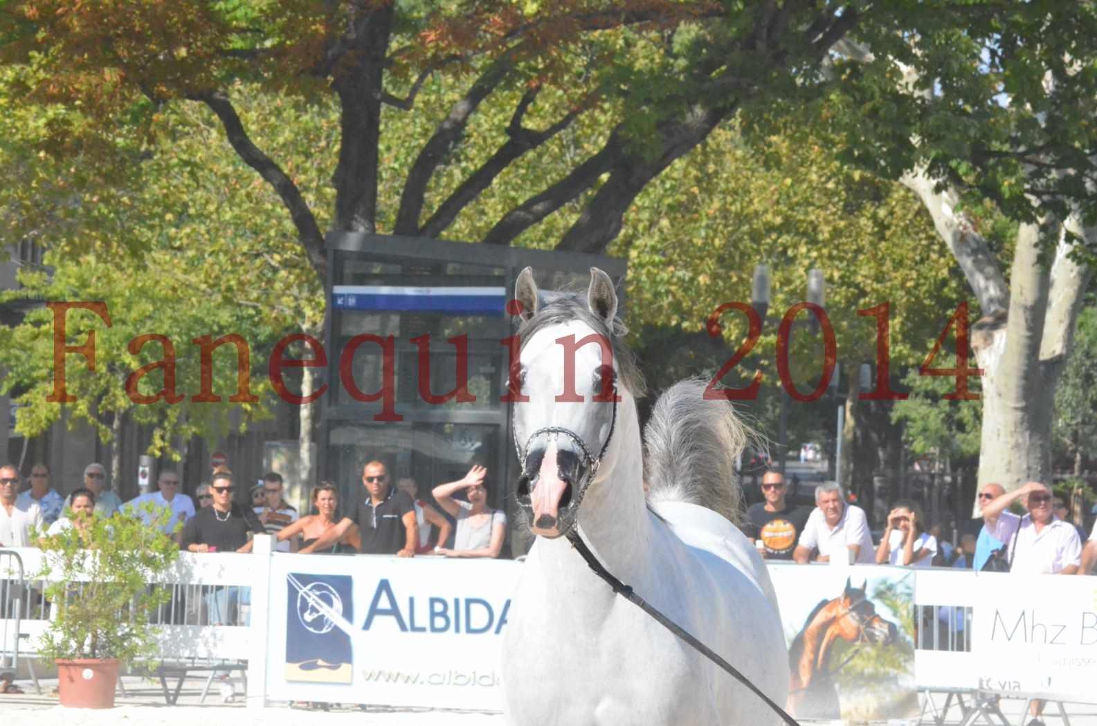 Concours National de Nîmes de chevaux ARABES 2014 - Championnat - SHAOLIN DE NEDJAIA - 19