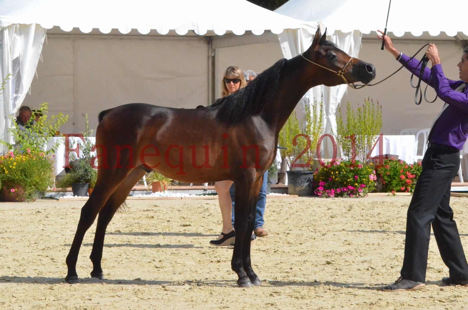 Championnat de FRANCE 2014 - Amateurs - SH FARAJAA - 38