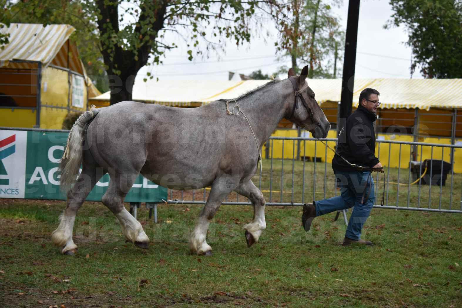 Concours Régional de chevaux de traits en 2017 - Jument & Poulain Trait BRETON - BELLE DOUS MOULIS - 10