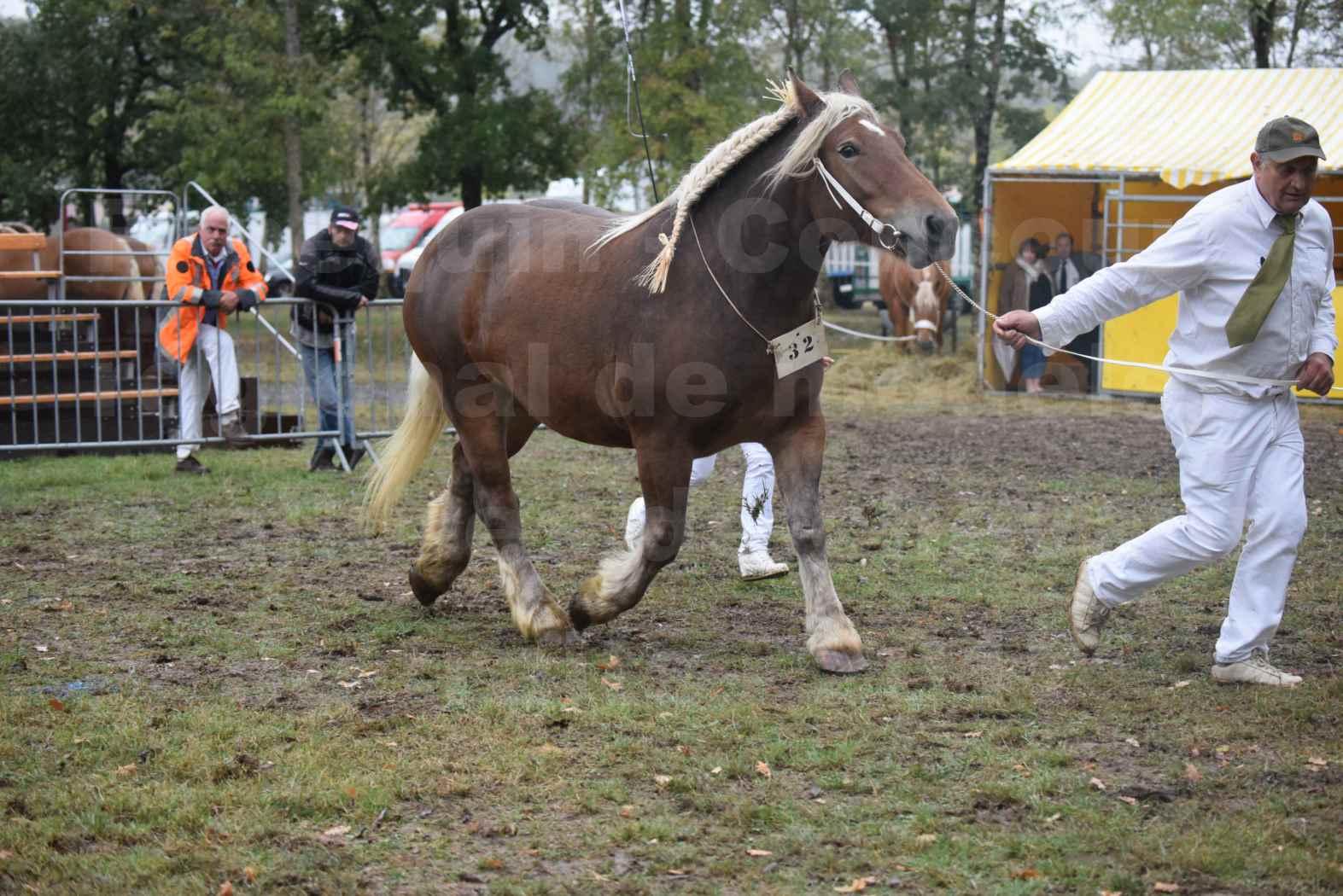 Concours Régional de chevaux de traits en 2017 - Pouliche Trait COMTOIS - ECLIPCE DE PIGASSOU - 15