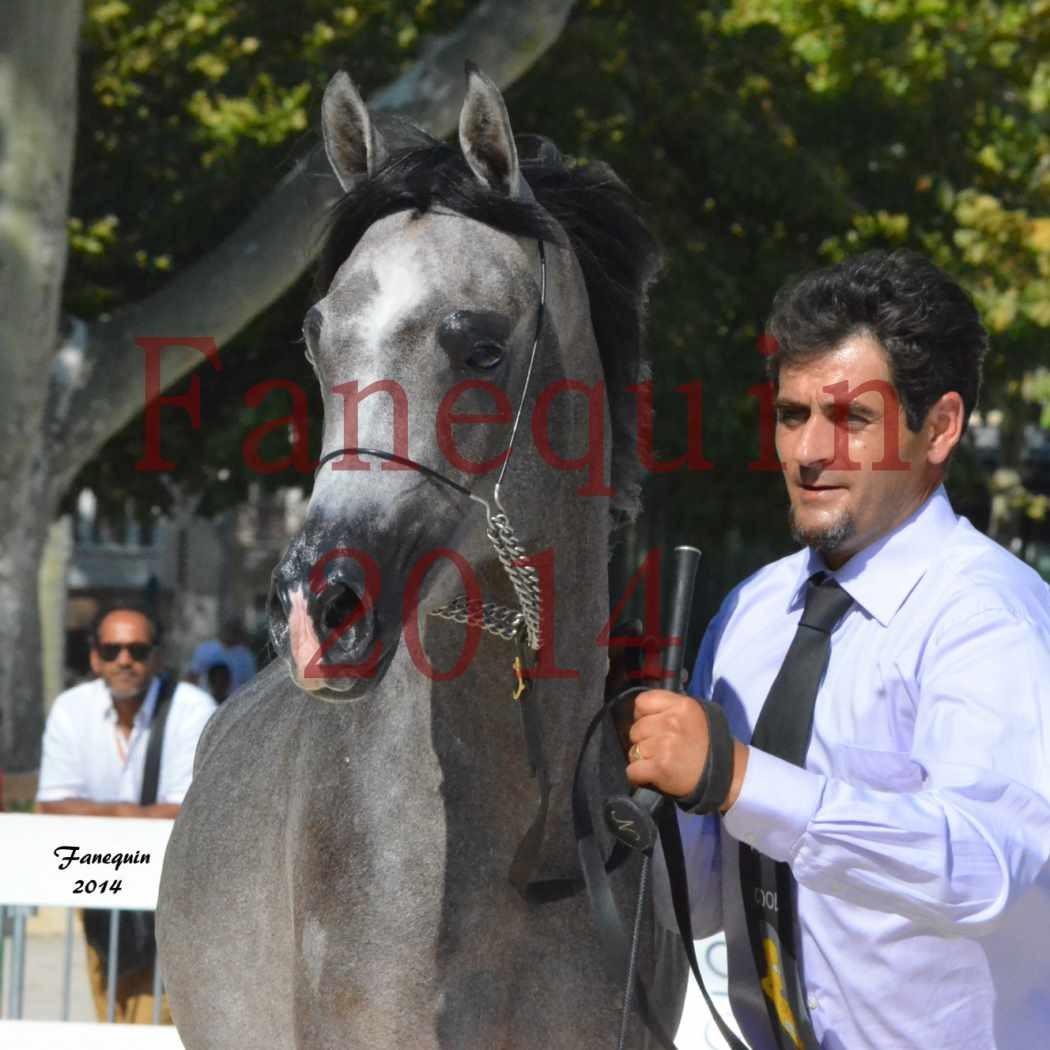 Concours National de Nîmes de chevaux ARABES 2014 - Notre Sélection - Portraits - JOSEPH'S BOUZIOLS - 08