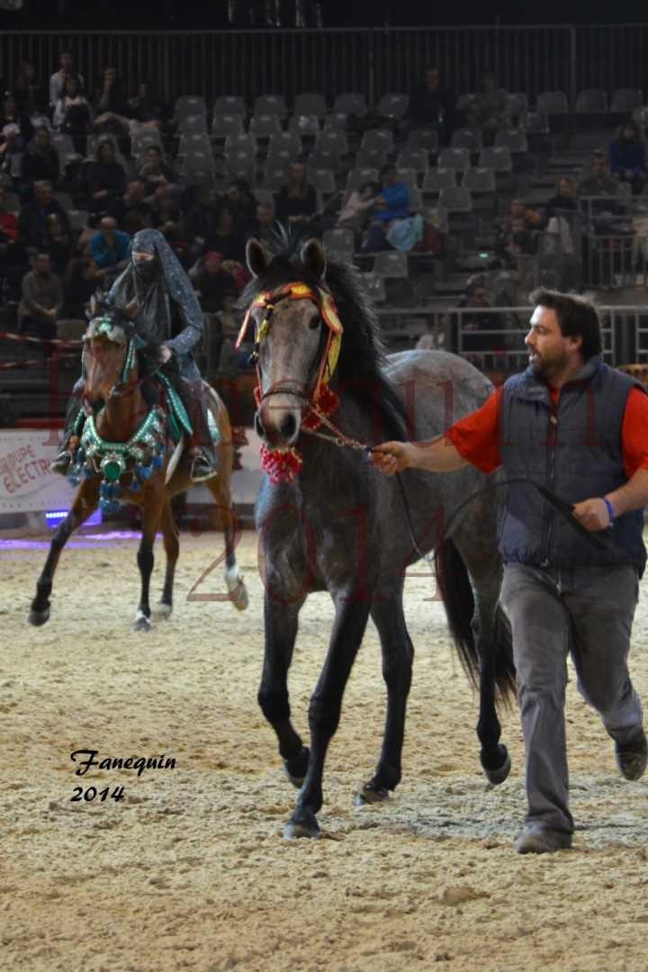 Show des races - Chevaux BARBE 13