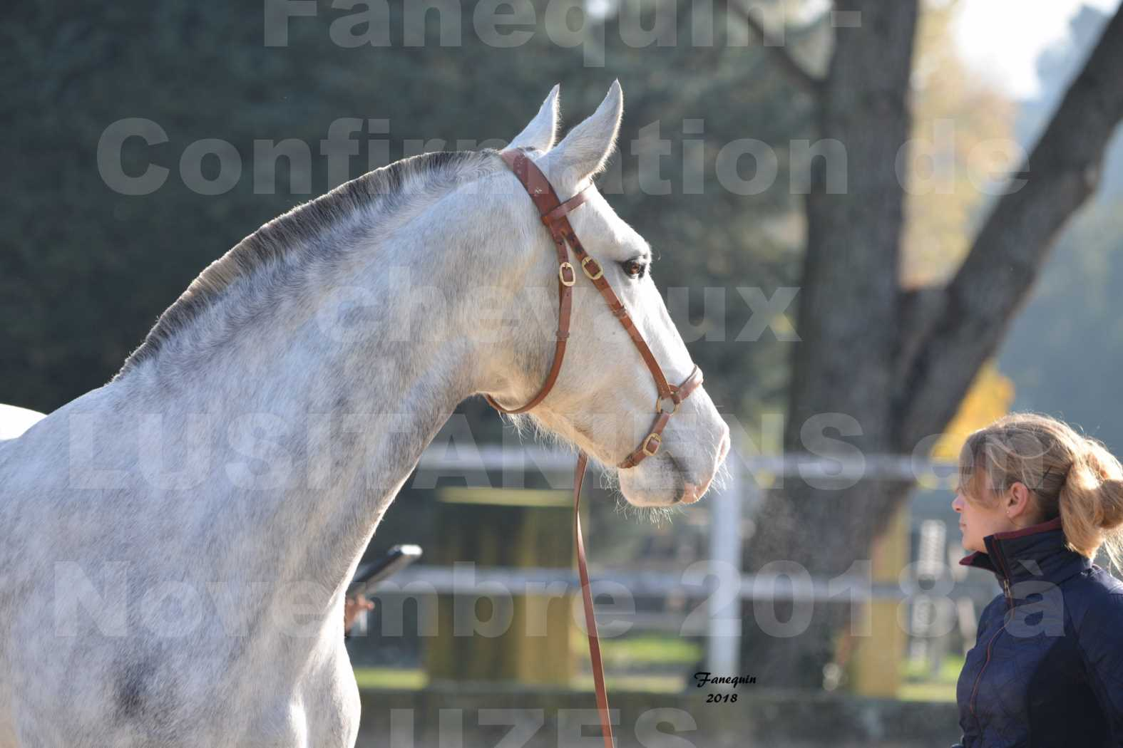 Confirmation de chevaux LUSITANIENS aux Haras d'UZES Novembre 2018 - LUTECE DU CASTEL - Portraits - 2