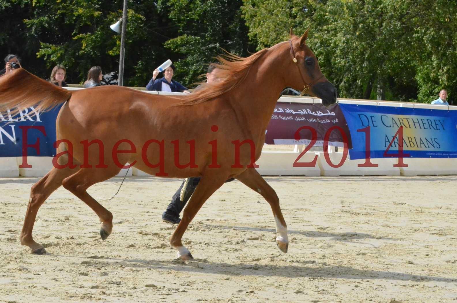 CHAMPIONNAT DE FRANCE 2014 A POMPADOUR - Sélection - LUTFINAH JA - 35