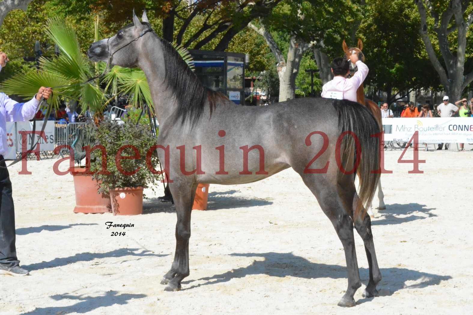 Concours National de Nîmes de chevaux ARABES 2014 - Notre Sélection - JOSEPH'S BOUZIOLS - 04