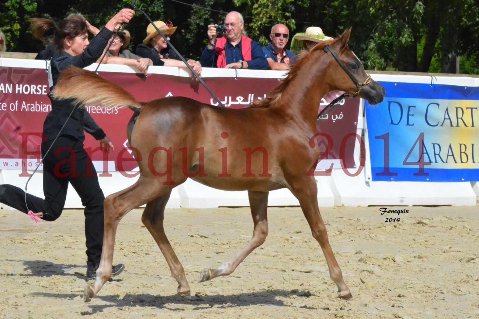 CHAMPIONNAT DE FRANCE 2014 A POMPADOUR - Notre Sélection - TSAR KENZA - 09