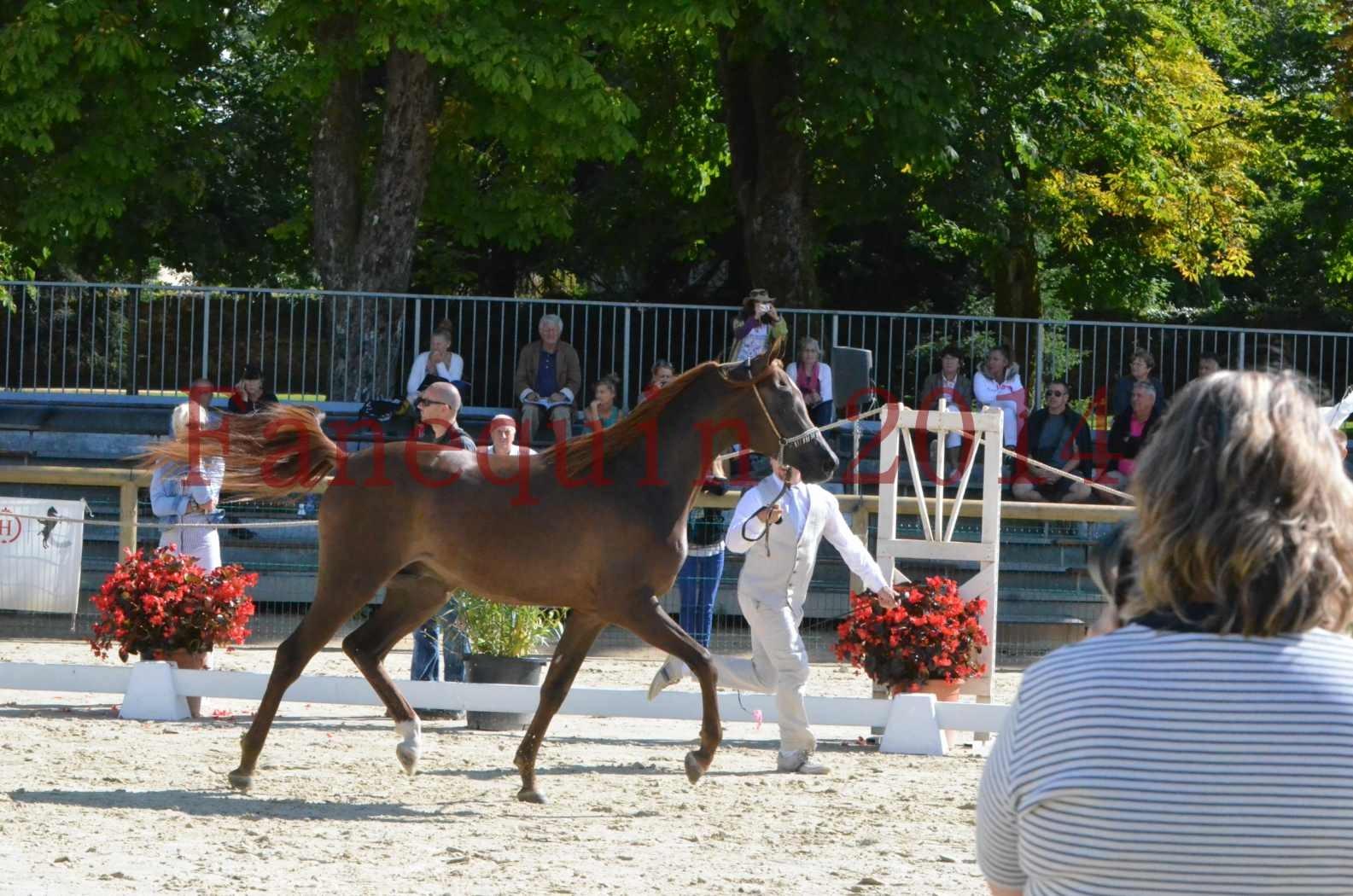 Championnat de FRANCE 2014 - Amateurs - LAMAL - 06