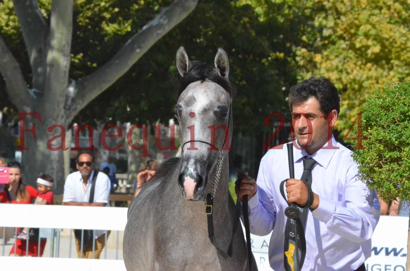 Concours National de Nîmes de chevaux ARABES 2014 - Championnat - JOSEPH'S BOUZIOLS - C 16