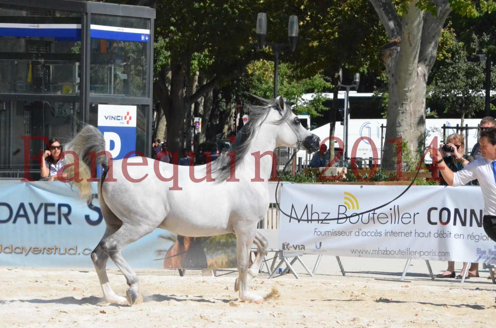 Concours National de Nîmes de chevaux ARABES 2014 - Sélection - SHAOLIN DE NEDJAIA - 28