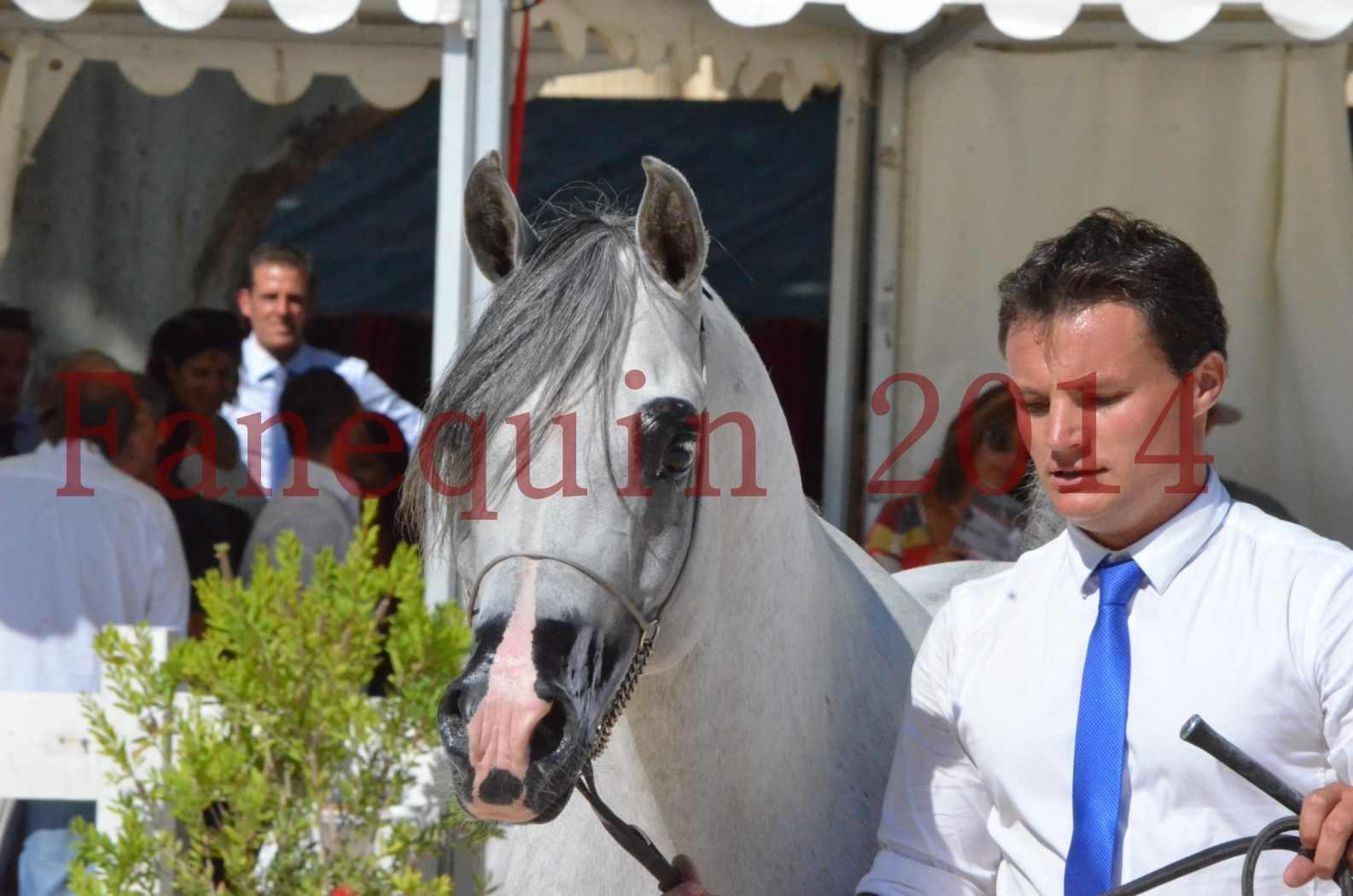 Concours National de Nîmes de chevaux ARABES 2014 - Sélection - SHAOLIN DE NEDJAIA - 75