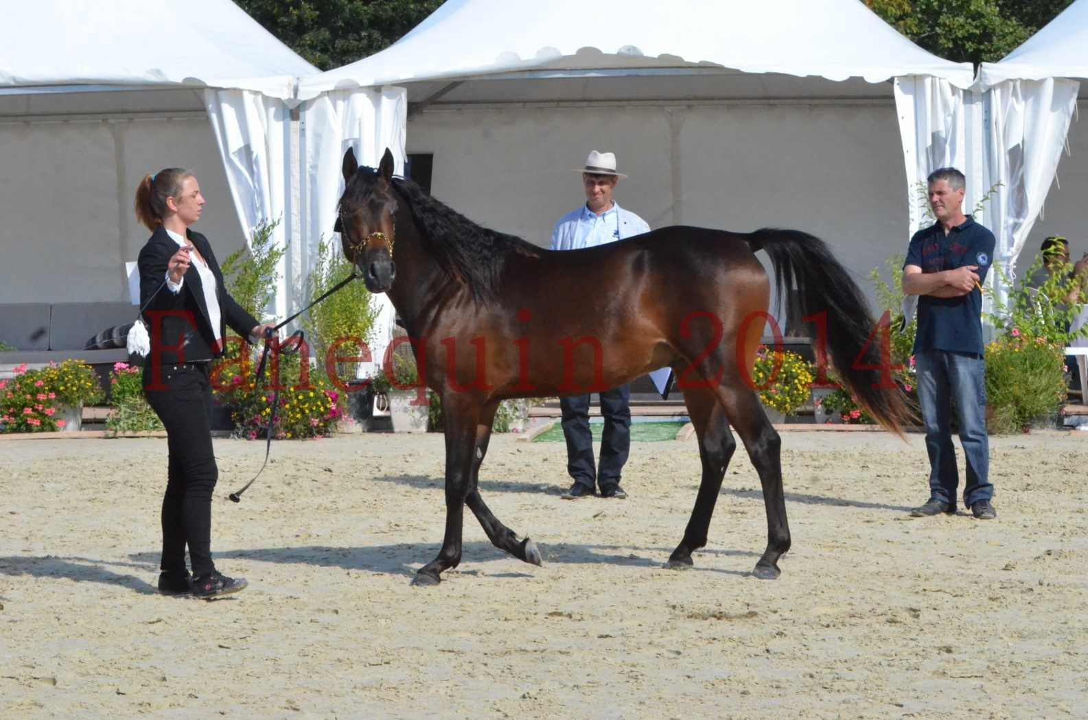 Championnat de FRANCE 2014 - Amateurs - JA KHALEB - 38