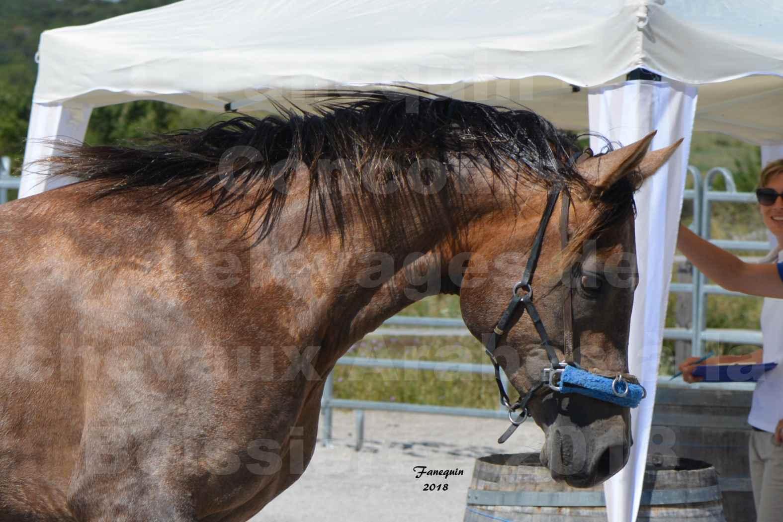Concours d'Elevage de chevaux Arabes  le 27 juin 2018 à la BOISSIERE - MAREK LOTOIS - 3