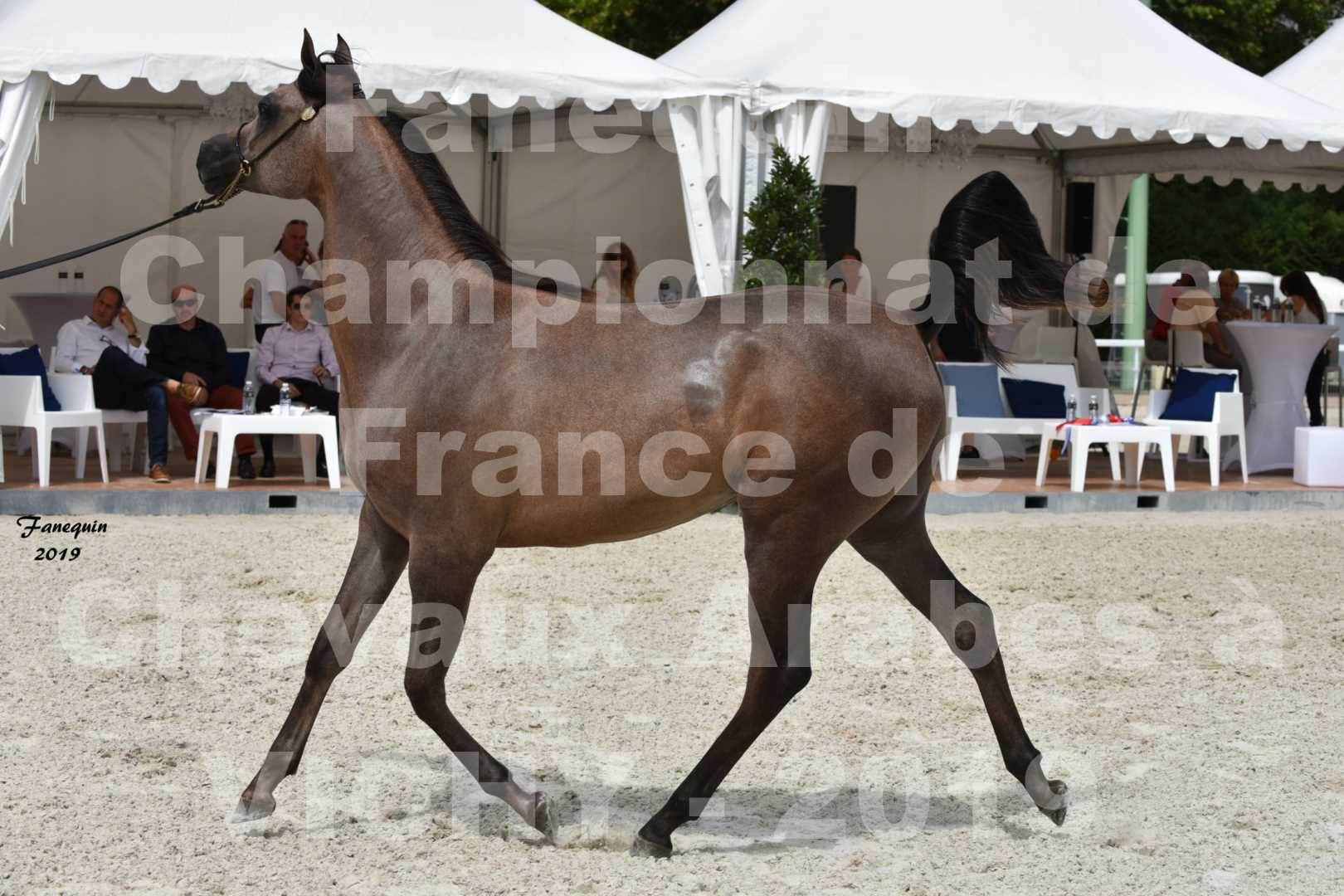 Championnat de France des chevaux Arabes en 2019 à VICHY - KENELM MISTRAL - 3