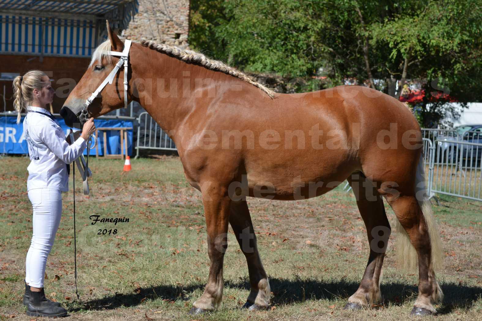 Concours départemental de chevaux de traits à GRAULHET en 2018 - Elevage POUJADE - Notre Sélection - 04