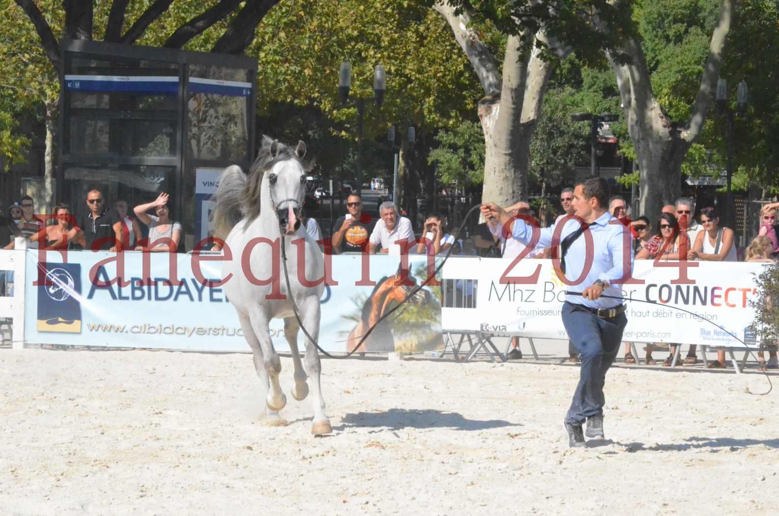 Concours National de Nîmes de chevaux ARABES 2014 - Championnat - SHAOLIN DE NEDJAIA - 17