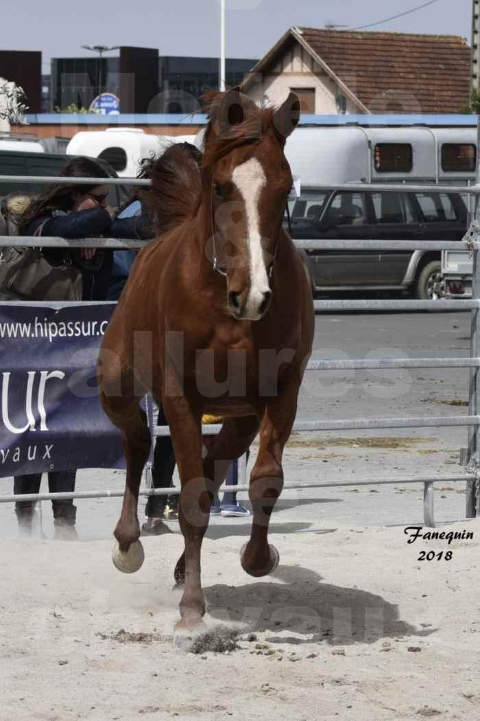 Concours d'élevage de Chevaux Arabes - D. S. A. - A. A. - ALBI les 6 & 7 Avril 2018 - FLEURON CONDO - Notre Sélection - 7