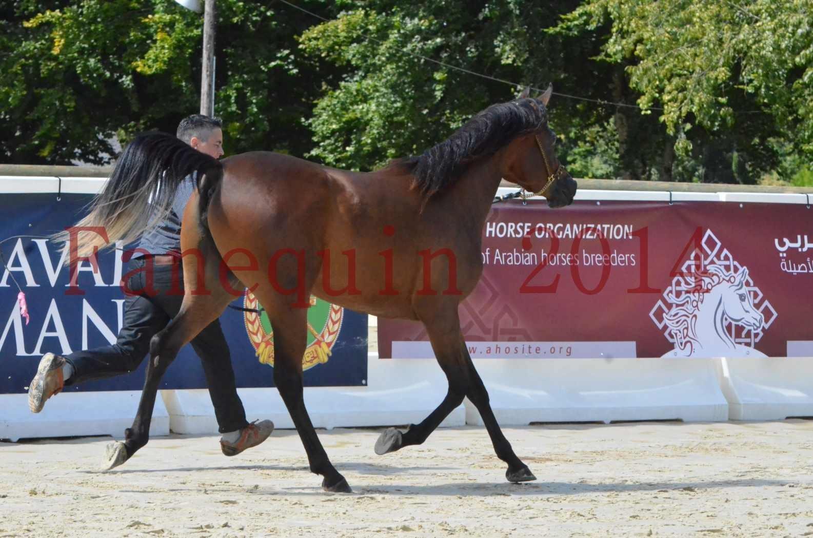 Championnat de FRANCE 2014 - Amateurs - KAL'ELLE D'ELHORIA - 63