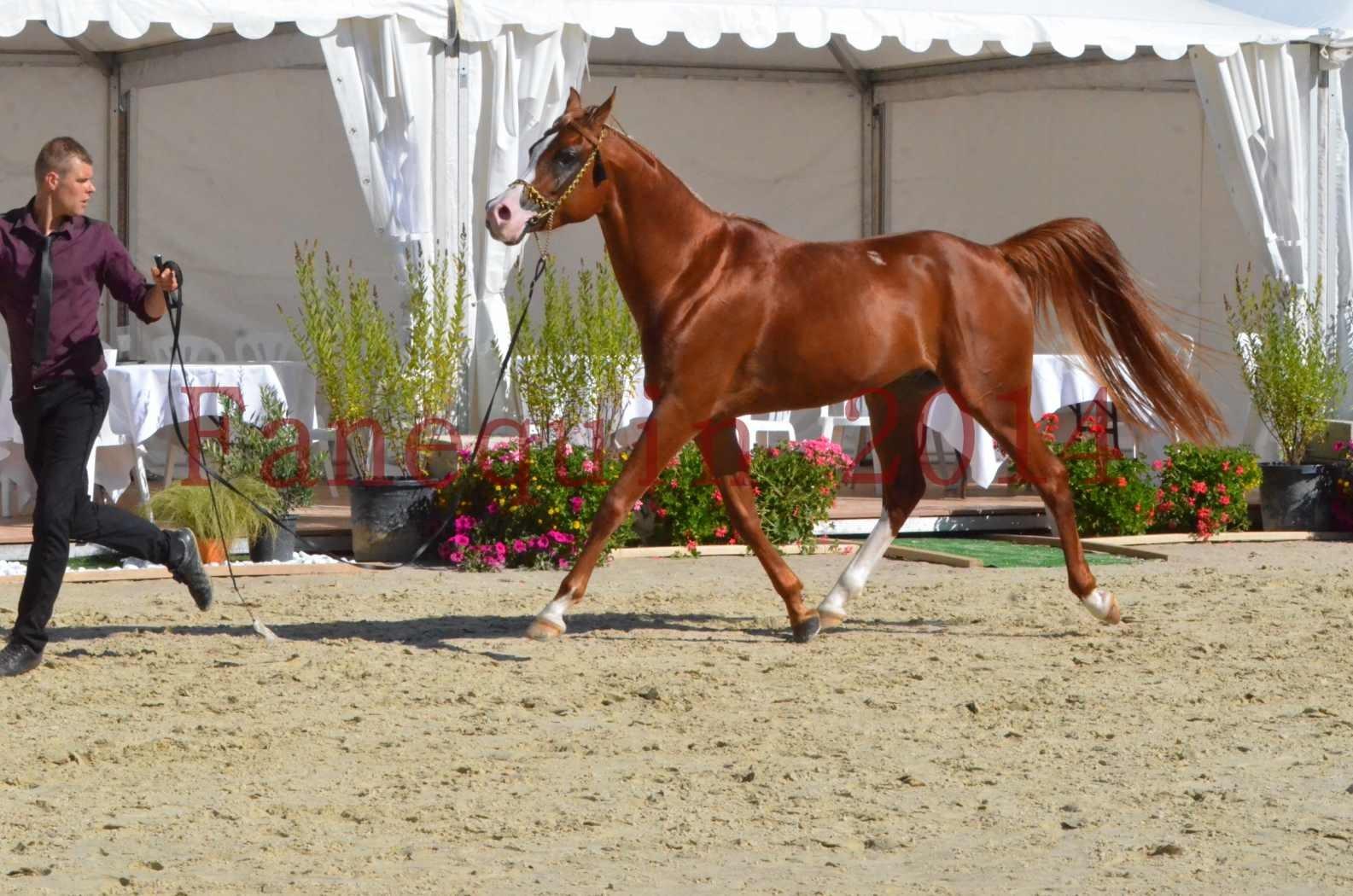 Championnat de FRANCE 2014 - Amateurs - SELECTO IBN SAMAWI - 054
