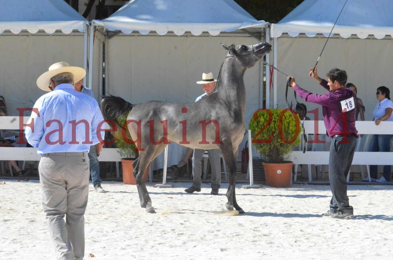 Concours National de Nîmes de chevaux ARABES 2014 - Championnat - JOSEPH'S BOUZIOLS - S 16