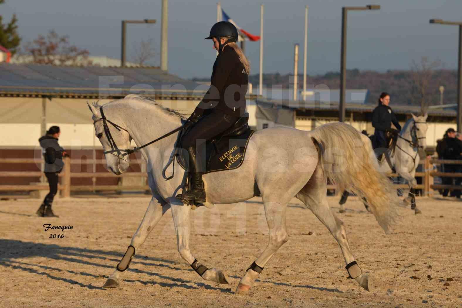 Cheval Passion 2016 - Présentation extérieure de chevaux Arabes montés - 20