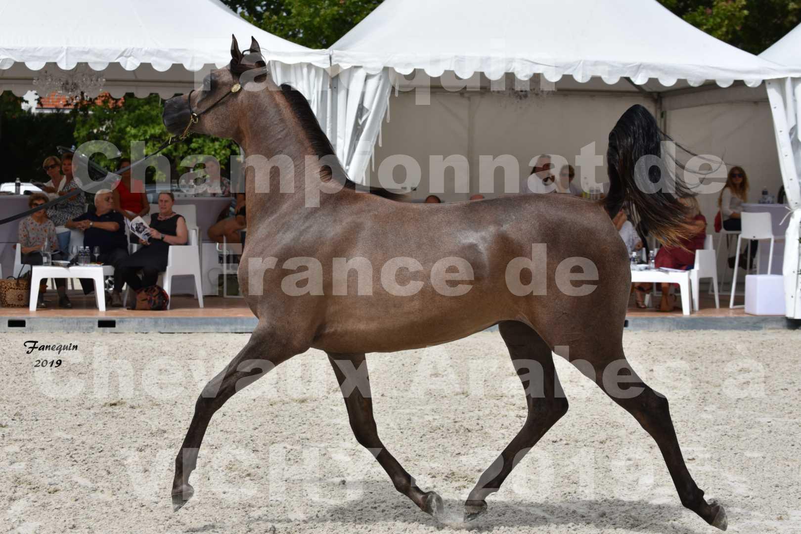 Championnat de France des chevaux Arabes en 2019 à VICHY - KENELM MISTRAL - 4
