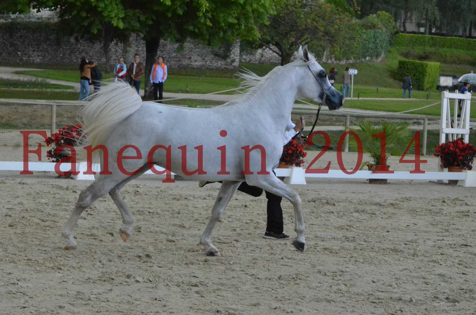 CHAMPIONNAT DE FRANCE 2014 A POMPADOUR - Sélection - FA STARLIGHT - 07