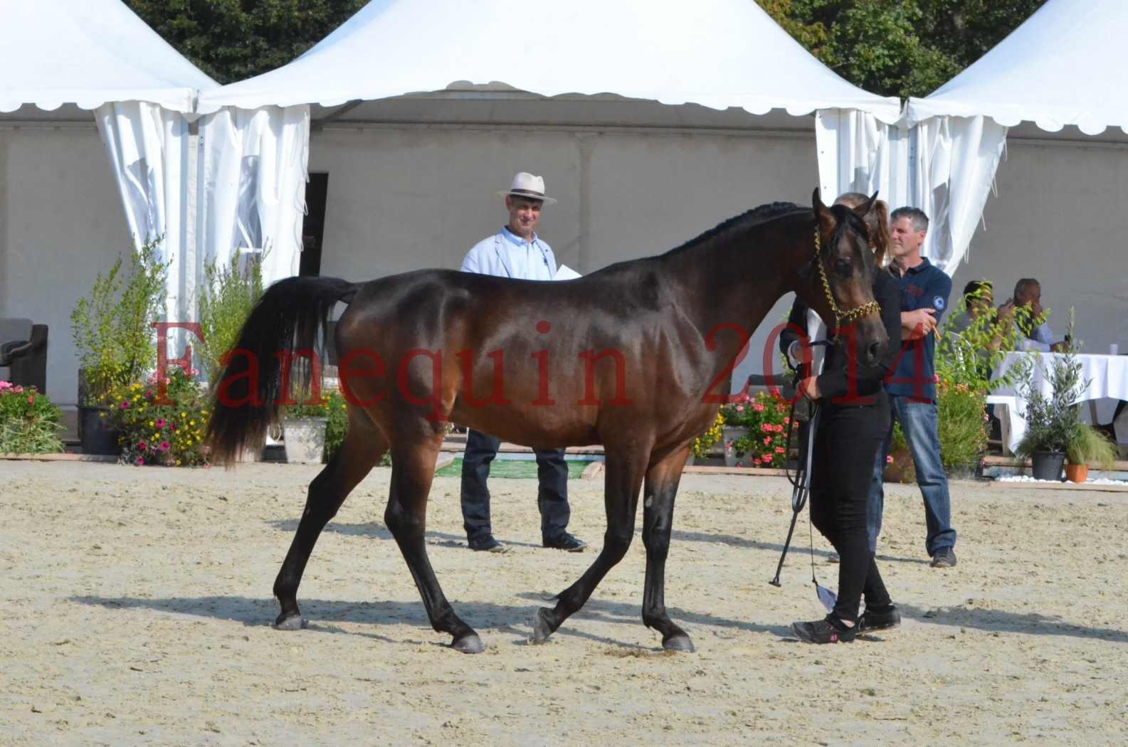Championnat de FRANCE 2014 - Amateurs - JA KHALEB - 35