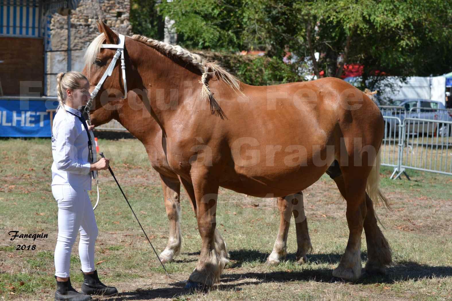 Fête du cheval à GRAULHET le 16 septembre 2018 - Concours Départemental de chevaux de traits - 39