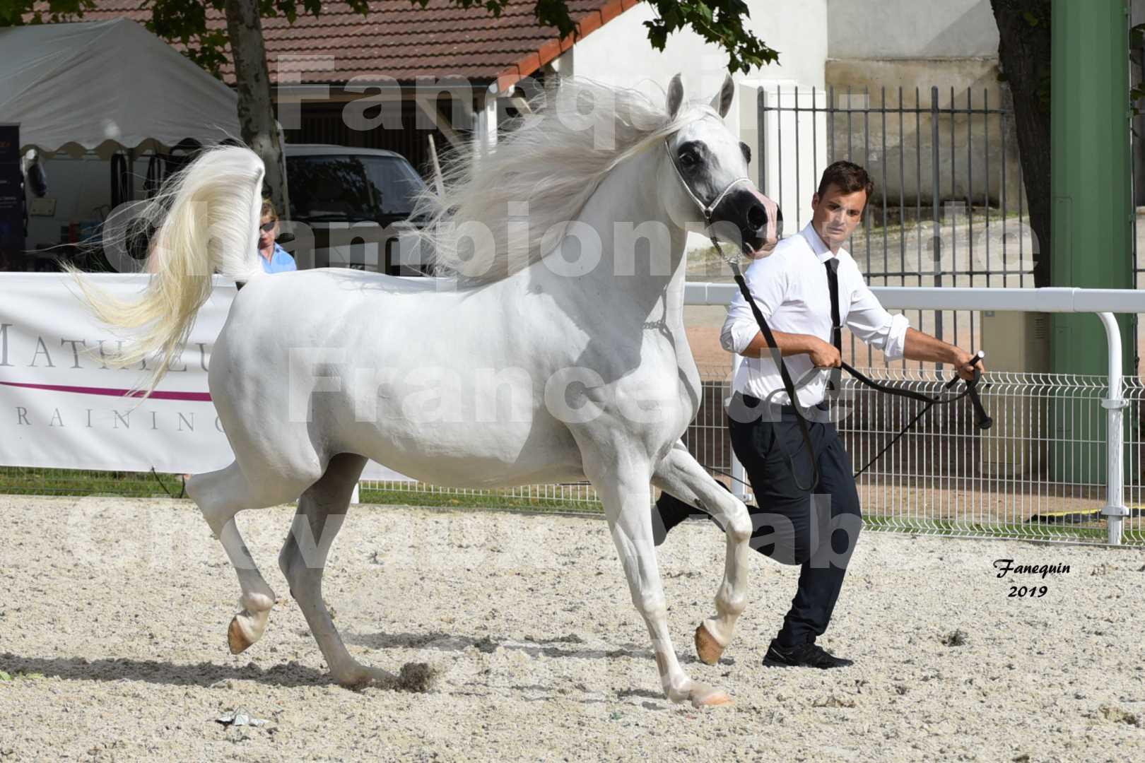 Championnat de France des chevaux Arabes en 2019 à VICHY - PIWNICIA NUNKI - 1