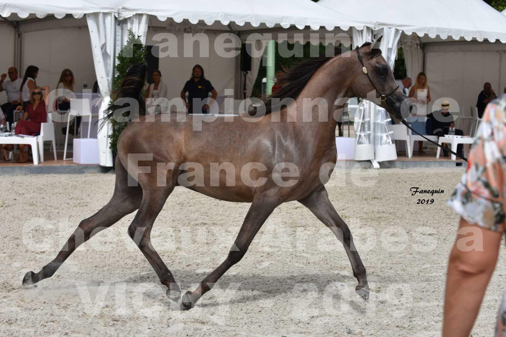 Championnat de France des chevaux Arabes en 2019 à VICHY - KENELM MISTRAL - 2