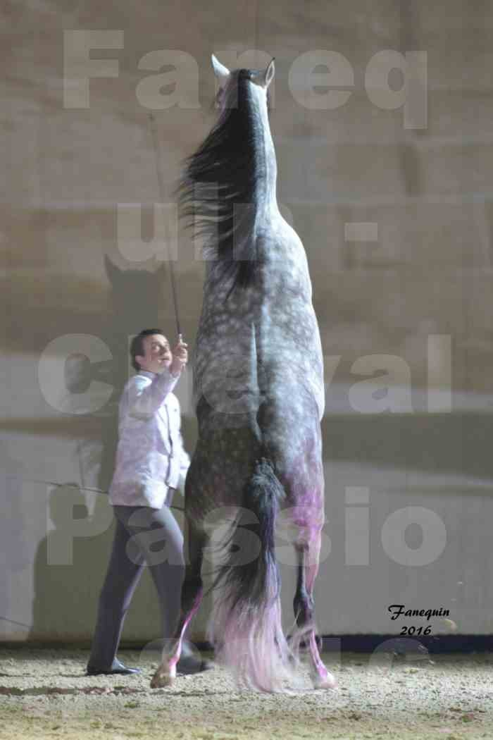 Cheval Passion 2016 - MISEC - Vincent LIBERATOR - 08