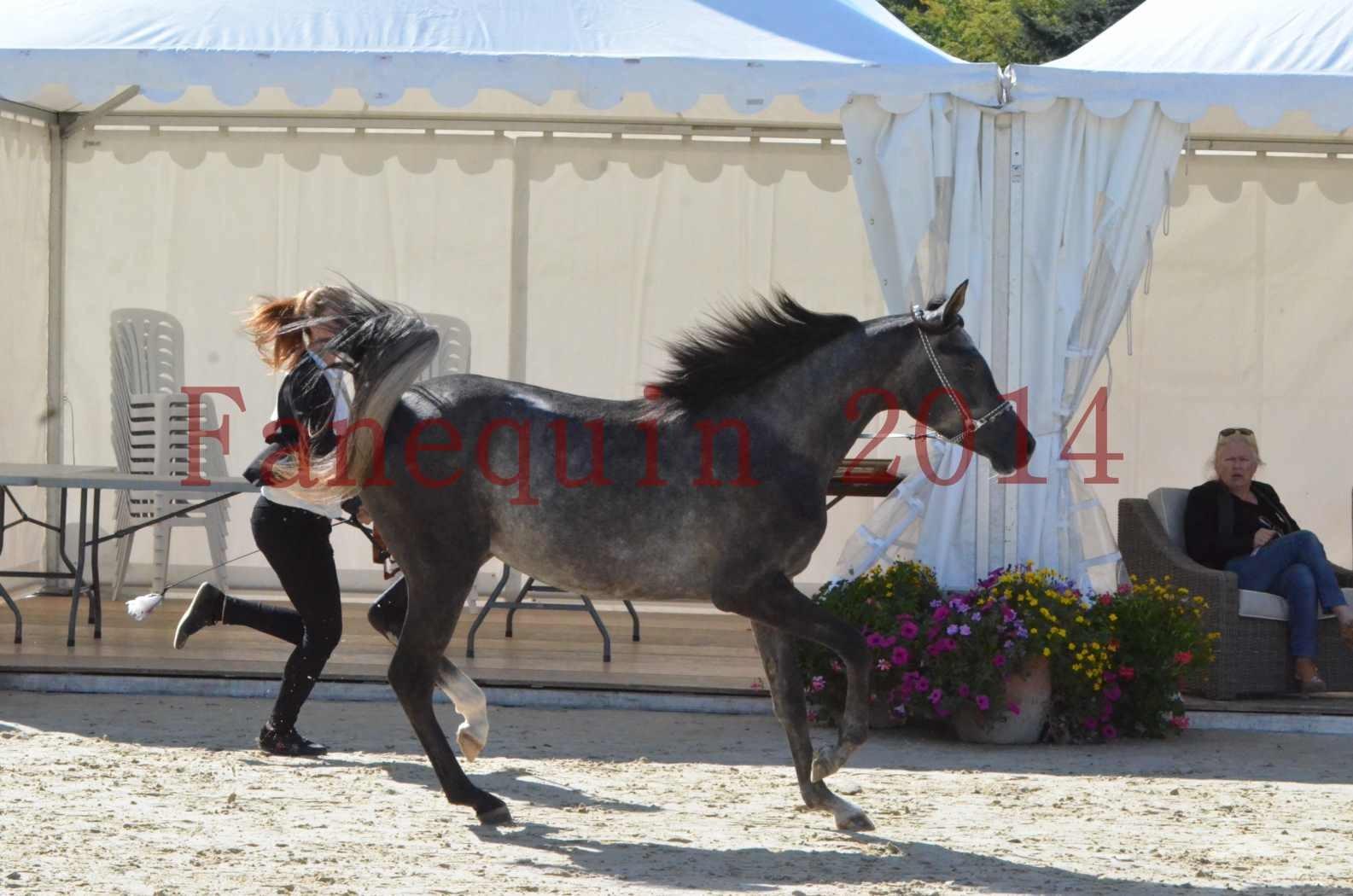 Championnat de FRANCE 2014 - Amateurs - CHTI KAID D'AUBIN - 19