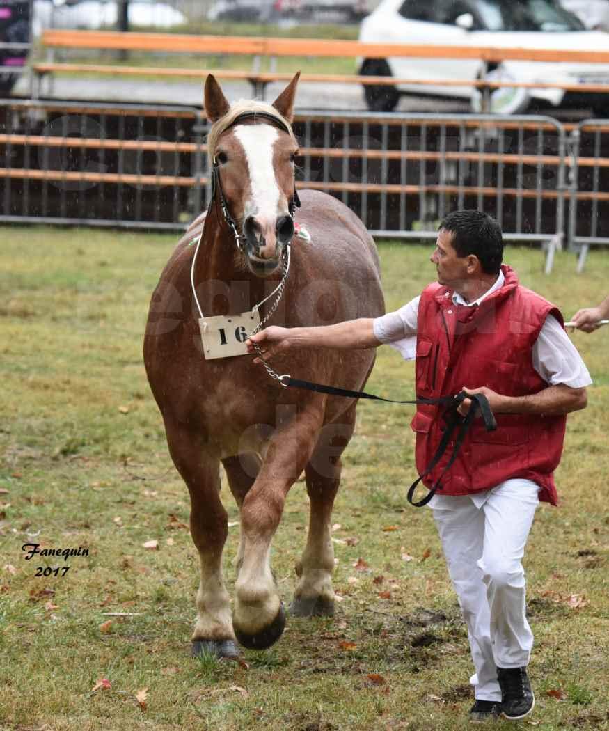 Concours Régional de chevaux de traits en 2017 - Trait ARDENNAIS - FLEUR D'ARIES - 06