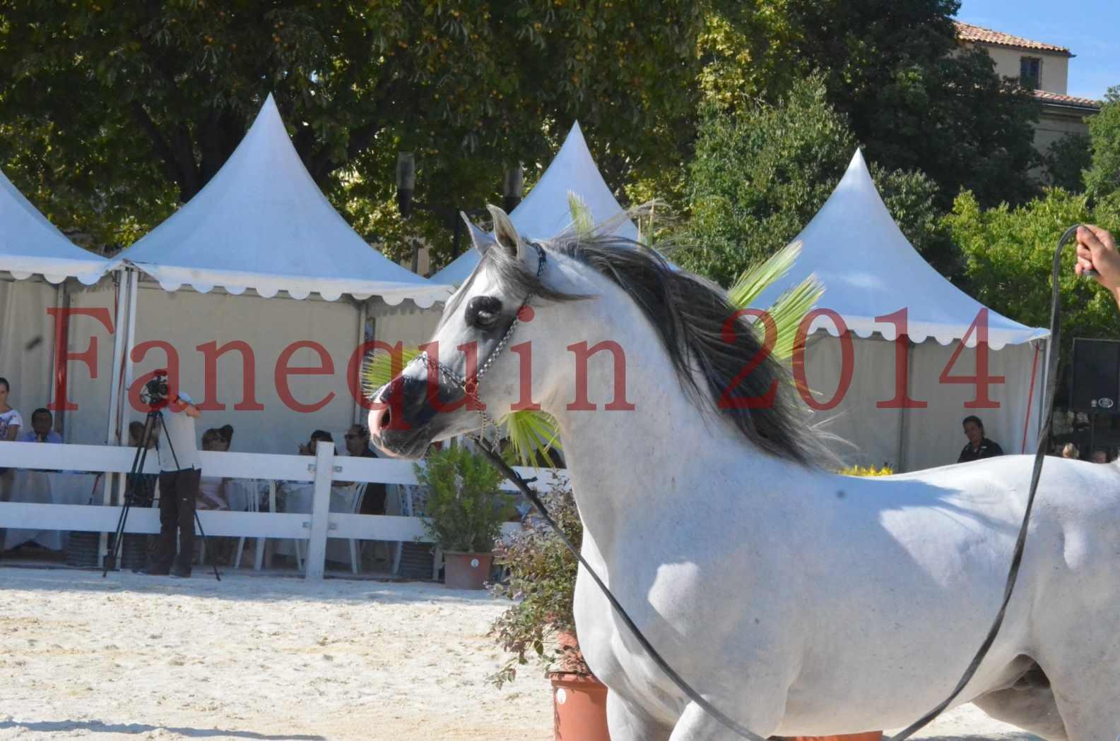 Concours National de Nîmes de chevaux ARABES 2014 - Championnat - SHAOLIN DE NEDJAIA - 32