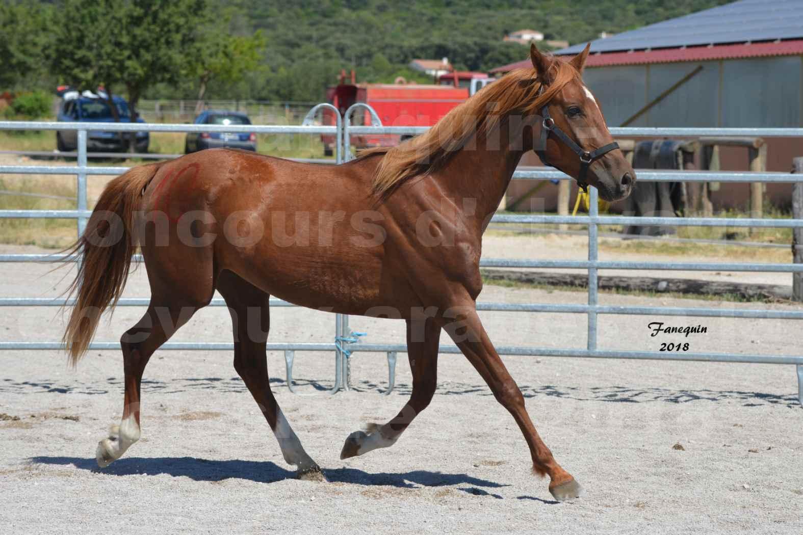 Concours d'Elevage de chevaux Arabes  le 27 juin 2018 à la BOISSIERE - FINLEY DES DOLINES - 08