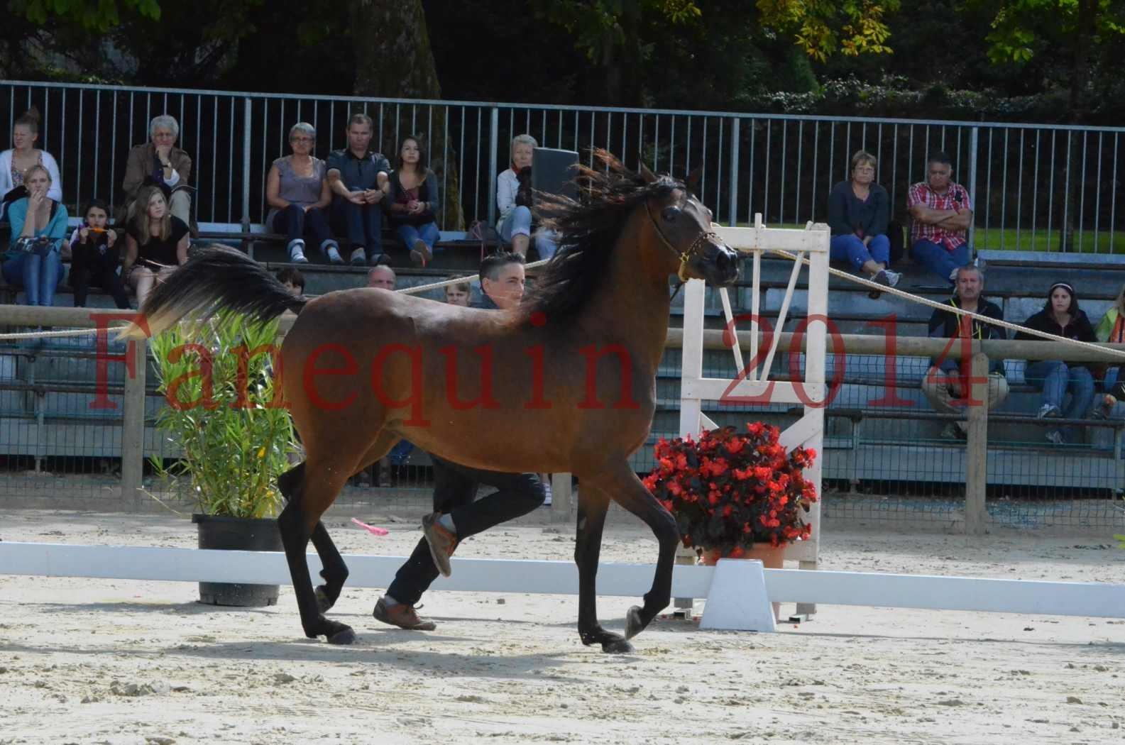 Championnat de FRANCE 2014 - Amateurs - KAL'ELLE D'ELHORIA - 43