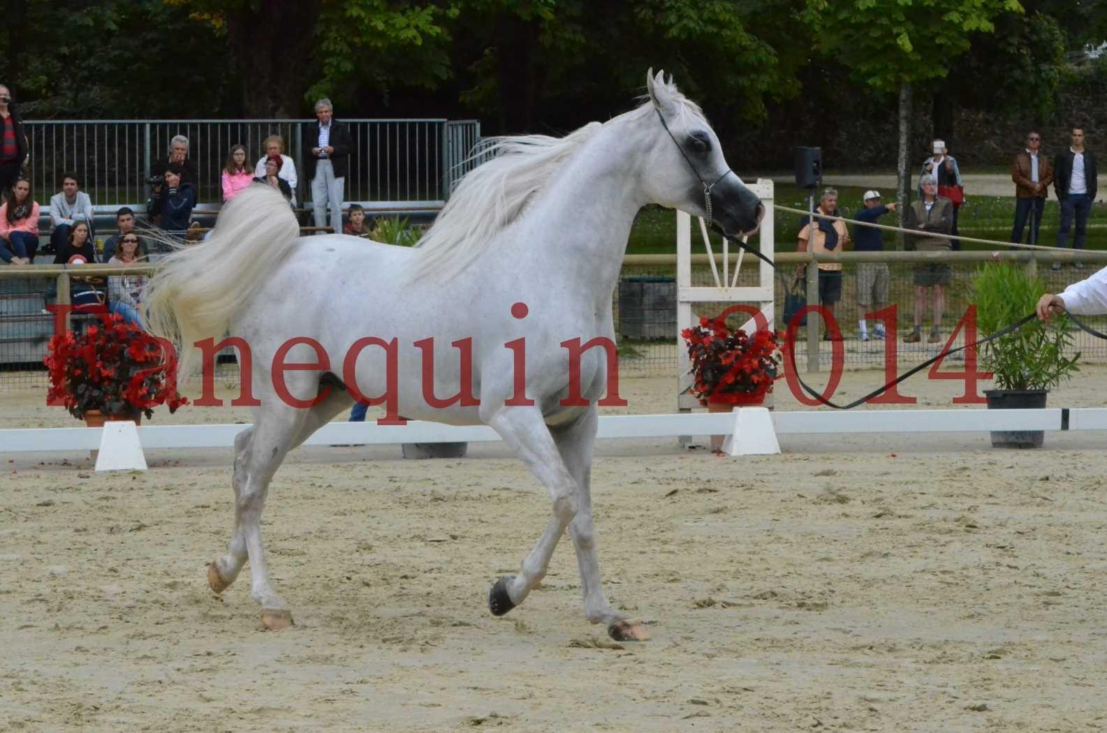 CHAMPIONNAT DE FRANCE 2014 A POMPADOUR - Sélection - FA STARLIGHT - 01