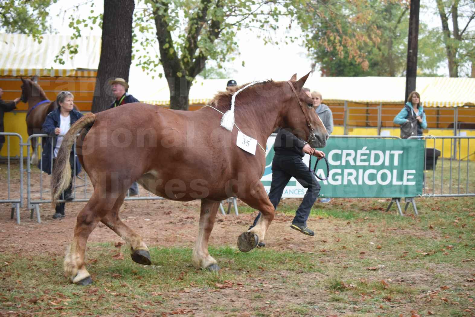 Concours Régional de chevaux de traits en 2017 - Pouliche Trait BRETON - EDEN DE LA GAUGE - 41