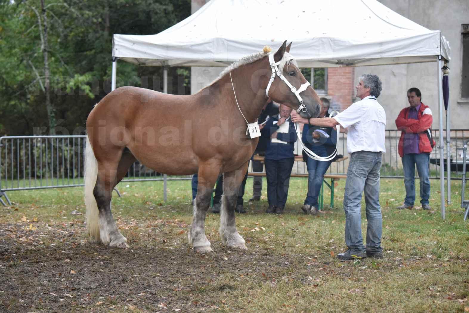 Concours Régional de chevaux de traits en 2017 - Trait COMTOIS - ETAMINE DES MONTANTS - 18
