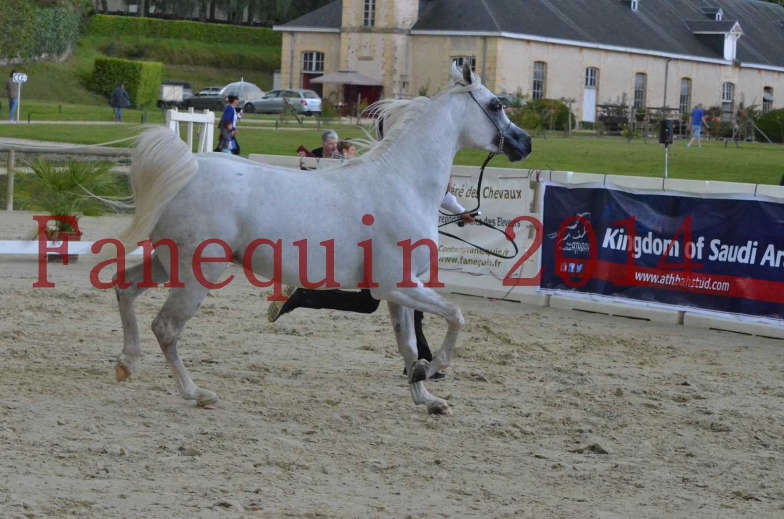 CHAMPIONNAT DE FRANCE 2014 A POMPADOUR - Sélection - FA STARLIGHT - 08