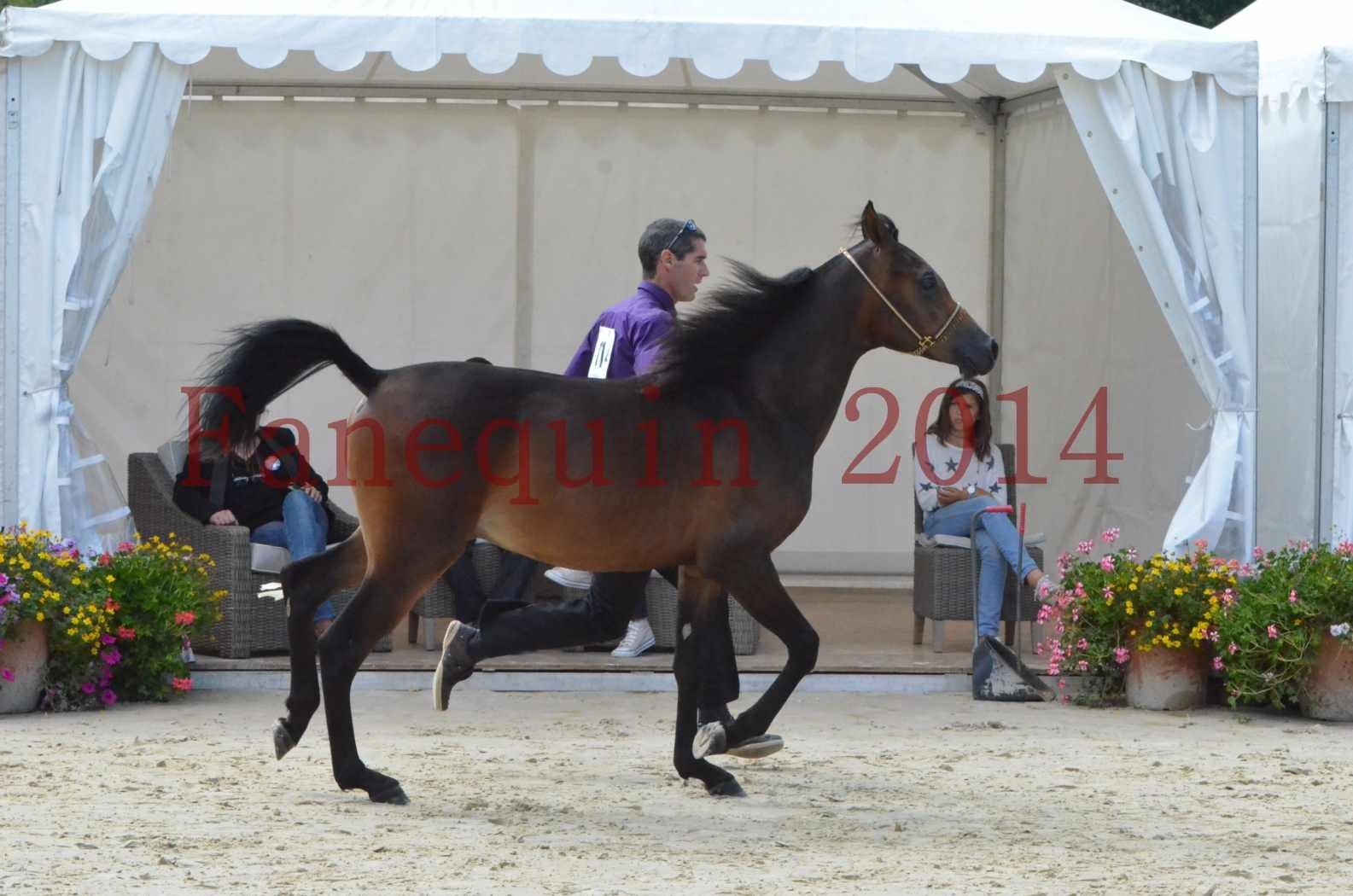 Championnat de FRANCE 2014 - Amateurs - SH FARAJAA - 17