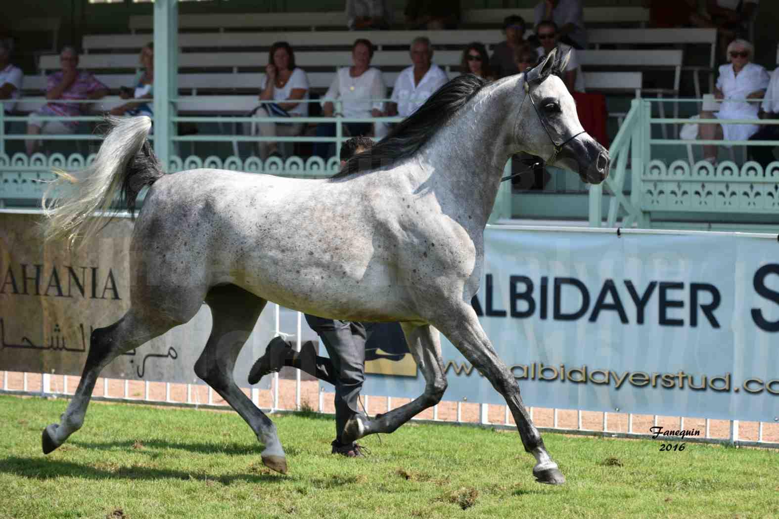International Arabian Horse Show B de VICHY 2016 - ISABELLA - Notre Sélection - 05