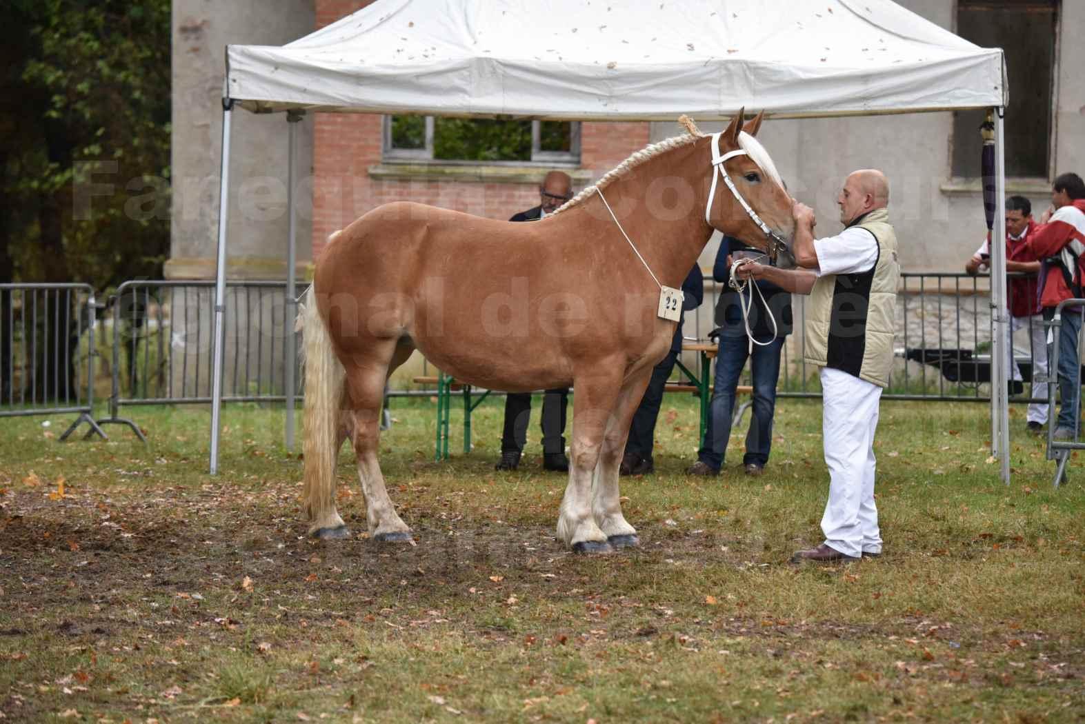 Concours Régional de chevaux de traits en 2017 - Trait COMTOIS - ELLA DE BELLER - 4