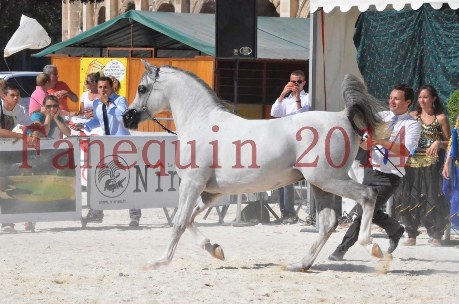 Concours National de Nîmes de chevaux ARABES 2014 - Sélection - SHAOLIN DE NEDJAIA - 33