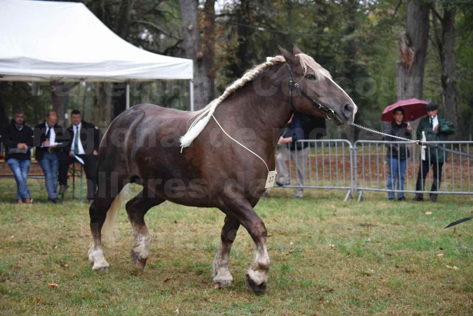 Concours Régional de chevaux de traits en 2017 - Trait BRETON - ELENNE DE TOU FOLL - 11