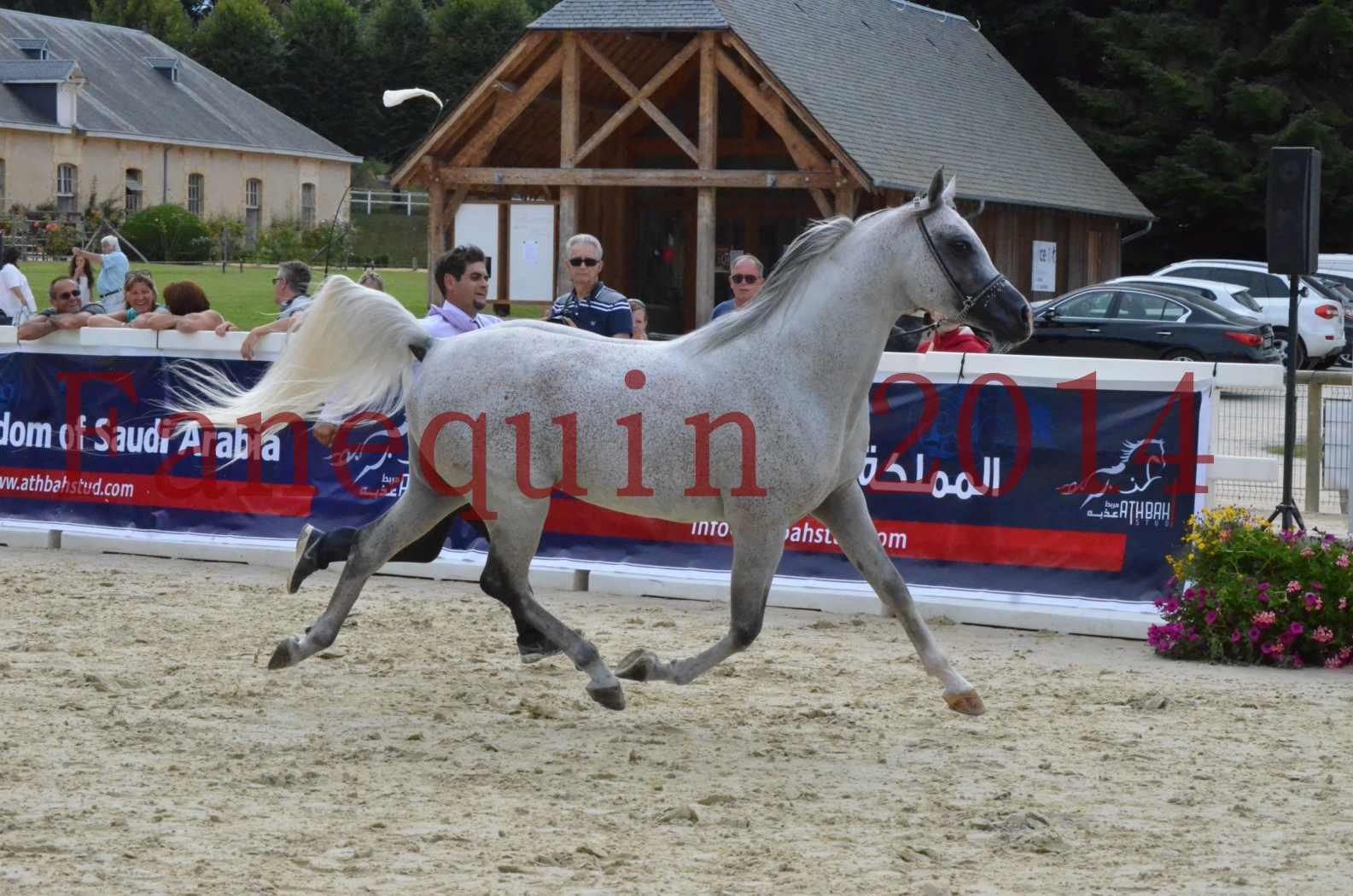 CHAMPIONNAT DE FRANCE  2014 A POMPADOUR - Championnat - SHEYK DE GARGASSAN - 02