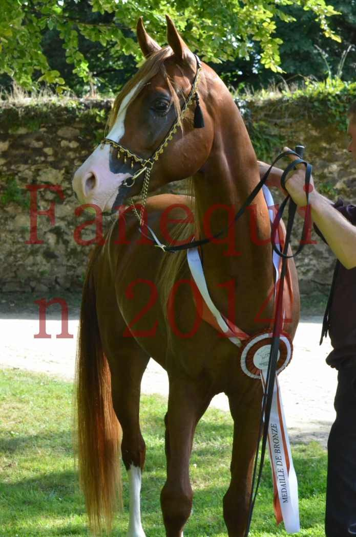 Championnat de FRANCE 2014 - Amateurs - SELECTO IBN SAMAWI - 170